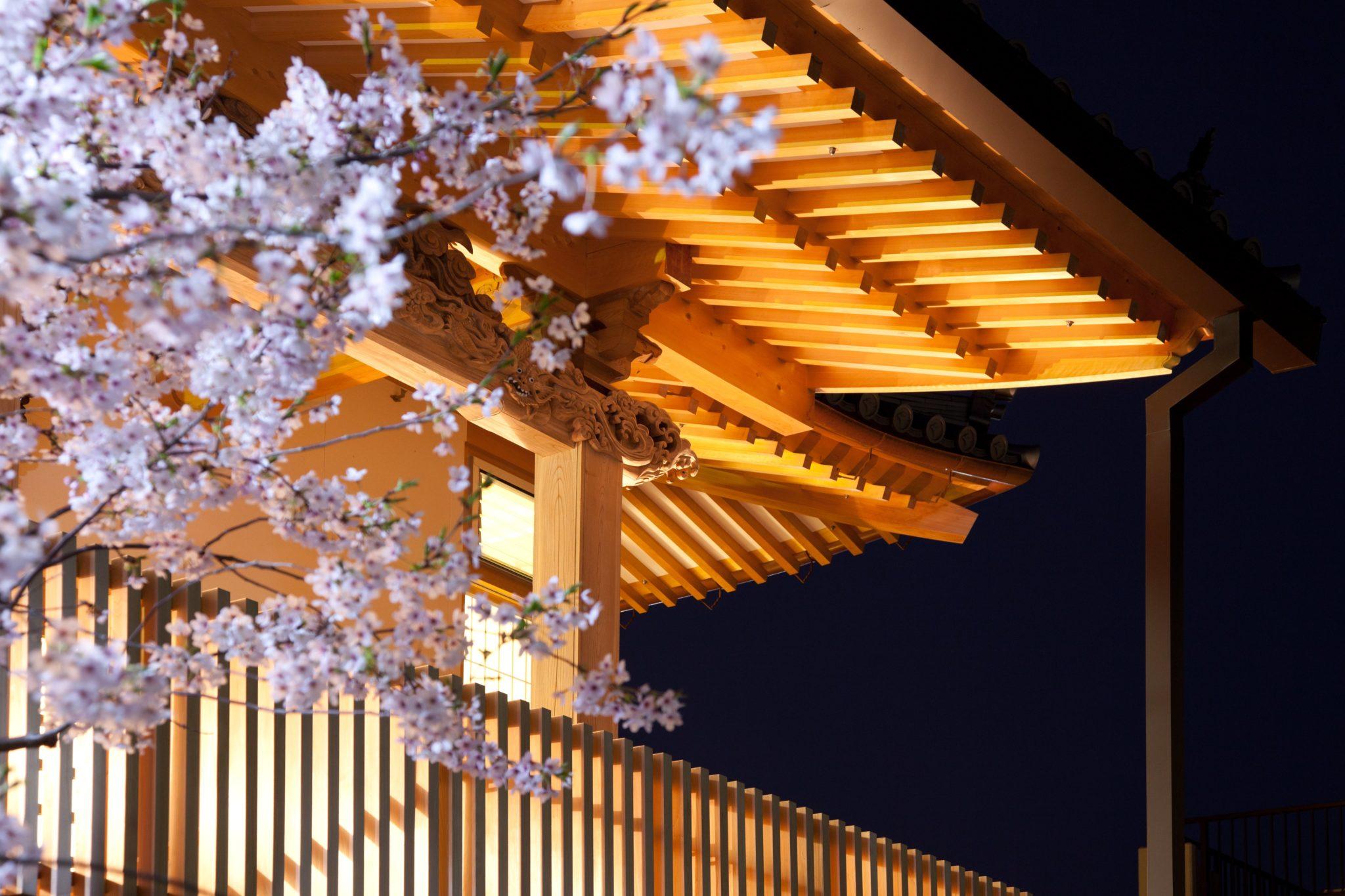 夜桜と本堂