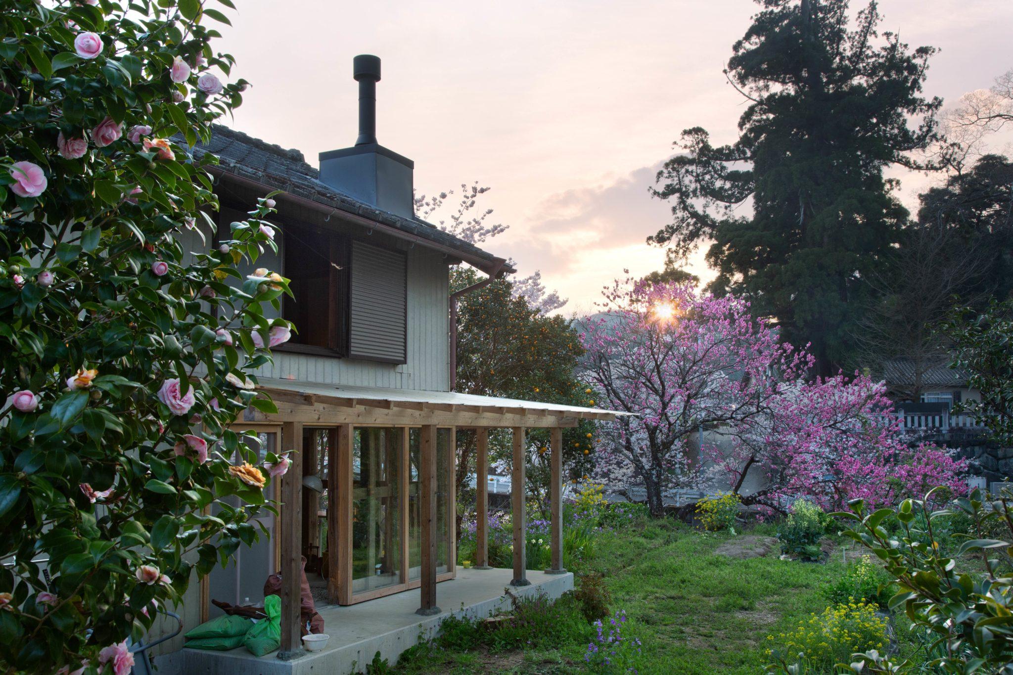 桜、桃、花に囲まれたくらしと夕暮れ。